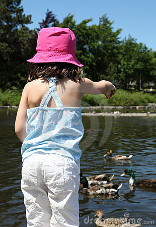 Sweet little girl feeding ducks in a pond