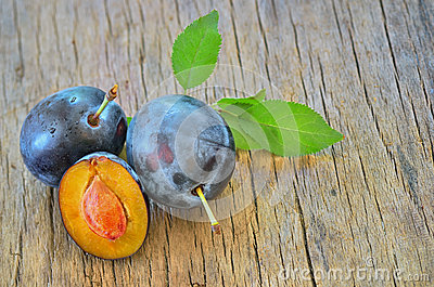 Sweet plum on the old wood
