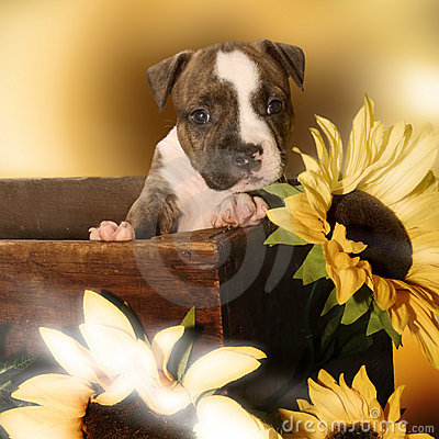 Free Sweet Puppy Royalty Free Stock Image - 413686