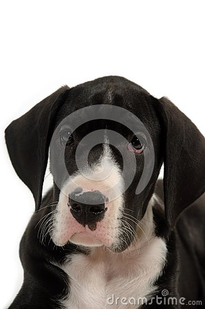 Sweet and sad dog