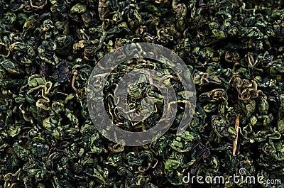 Sweet tea vine
