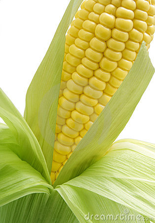 Free Sweetcorn On The Cob Royalty Free Stock Image - 3299436