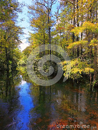 Free Sweetwater Strand Stock Photography - 27145122