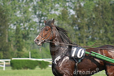 Swety horse