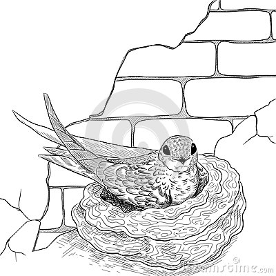 Swift on the nest