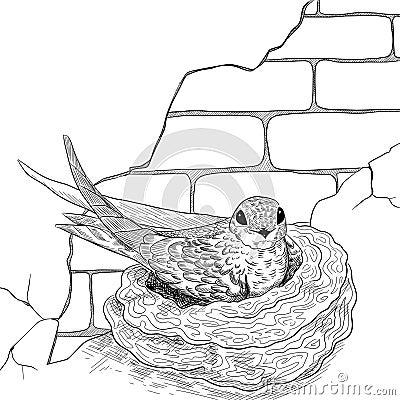 Swift on the nest Stock Photo