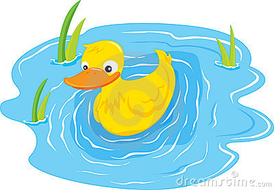 A swiming duck