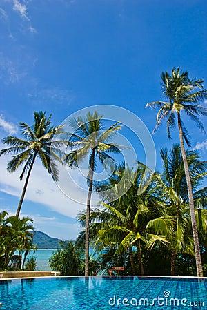 Swiming pool and coconut tree
