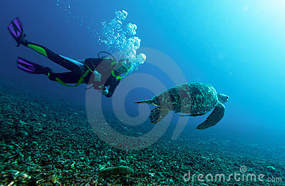 Swimming green turtle
