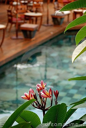 Swimming Pool, Mauritius