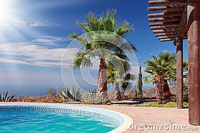 Swimming Pool and nice Palm