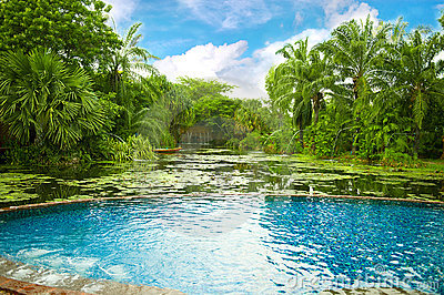 Swimming pool surrounded by tropical plants