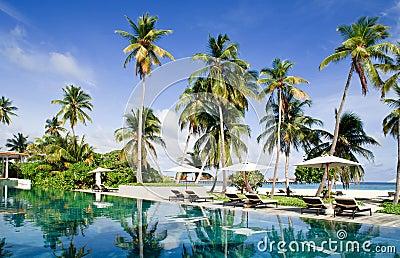 Swimmingpool auf einer tropischen Rücksortierung