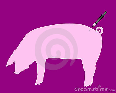 Swine gets an inoculation