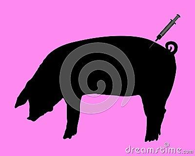 Swine gets an inoculation