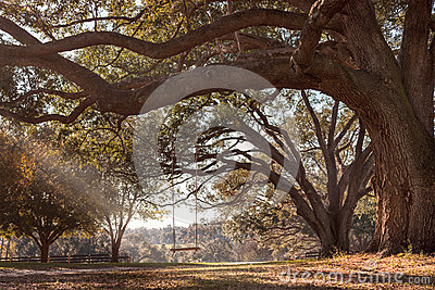 Swing Hanging From Tree Branch Stock Photo Image 50399169