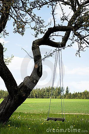 Free Swing On A Gnarly Tree Royalty Free Stock Images - 13423279