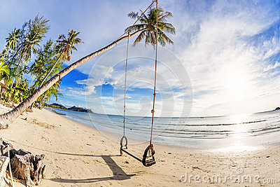 Swings and palm on the sand tropical beach.