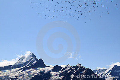 Swiss Alps: snow-covered peaks and flying birds