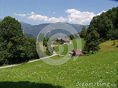 Swiss Summer Pastoral Scene