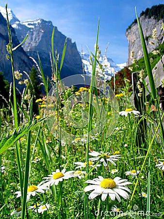 Free Switzerland Landscape Royalty Free Stock Image - 1543526