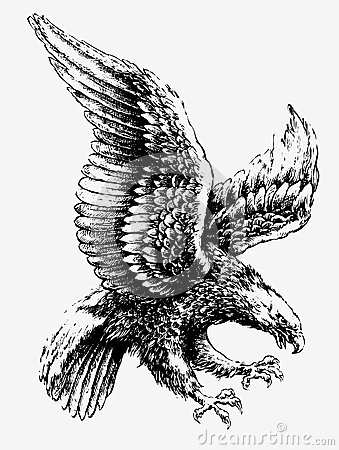 Free Swooping Eagle Royalty Free Stock Images - 33176559