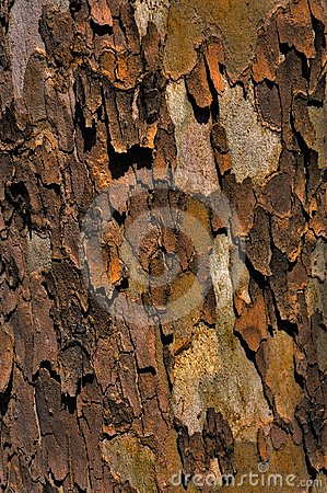 Free Sycamore Bark Stock Images - 24587034