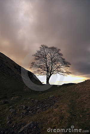 Sycamore Gap at Hadrians Wall