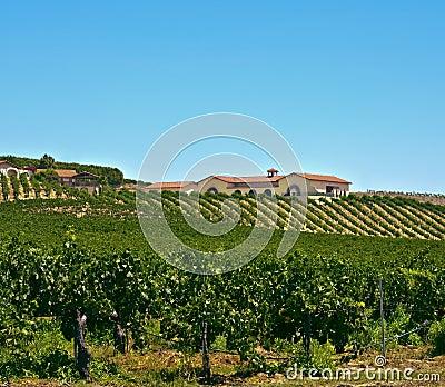 Sydlig wine för Kalifornien land