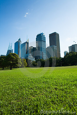 Sydney Skyline From The Park