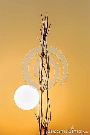 Sylwetka wschód słońca