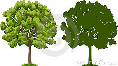 Sylwetki drzewo