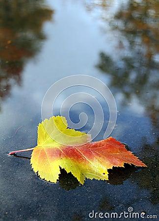 Symbol of autumn