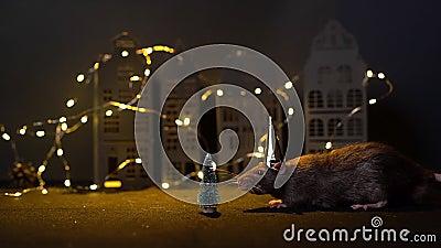 Symbol des kommenden Jahres 2020 süße Ratte in festlichem Gold, die in der Nähe des Weihnachtsbaums sitzt stock video