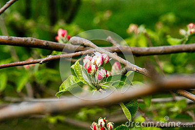 Symbolic fresh spring blossom