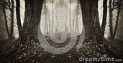 Symmetrical dark forest with fog on halloween