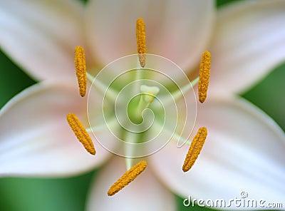 Symmetrical flower closeup