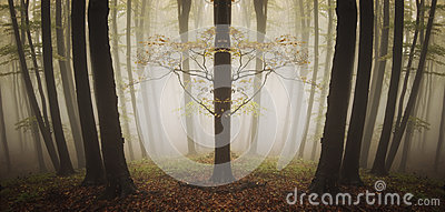 Symmetrical strange tree in a forest with fog