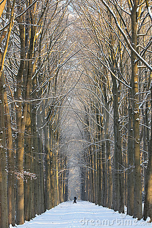 Symmetrical winter lane