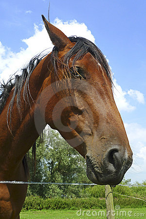 Sympathetic horse leaning over a fence