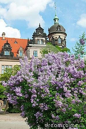 Syringa Blossom in Dresden