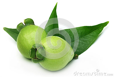 Syzygium jambos locally known as golapjam in Bangladesh