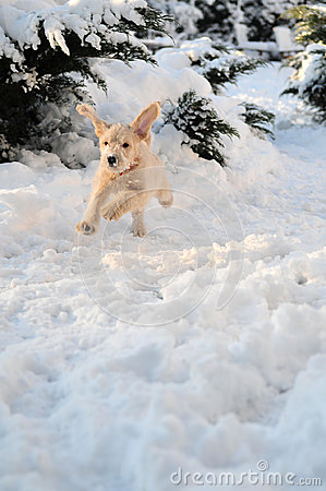 Szczeniak w śniegu