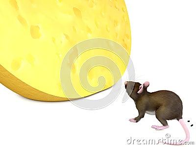 Mysz i chese