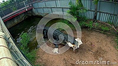 Szeroki strzał klauzura z krokodyla gryzienia wiadrem zbiory wideo