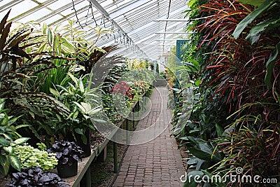 Szklarniane rośliny