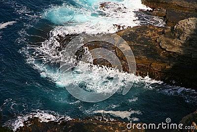 Szorstcy morza
