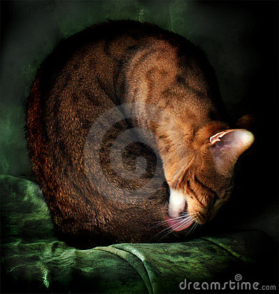 Sztuki Bengal kota grzywny portret
