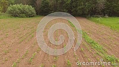Szybki latanie strona nad pole kukurudza i łąka zdjęcie wideo