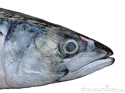 Tête des poissons